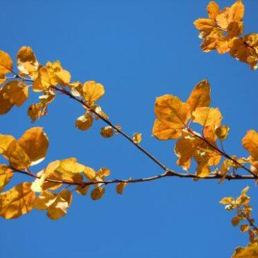 Höstens yogaplanering